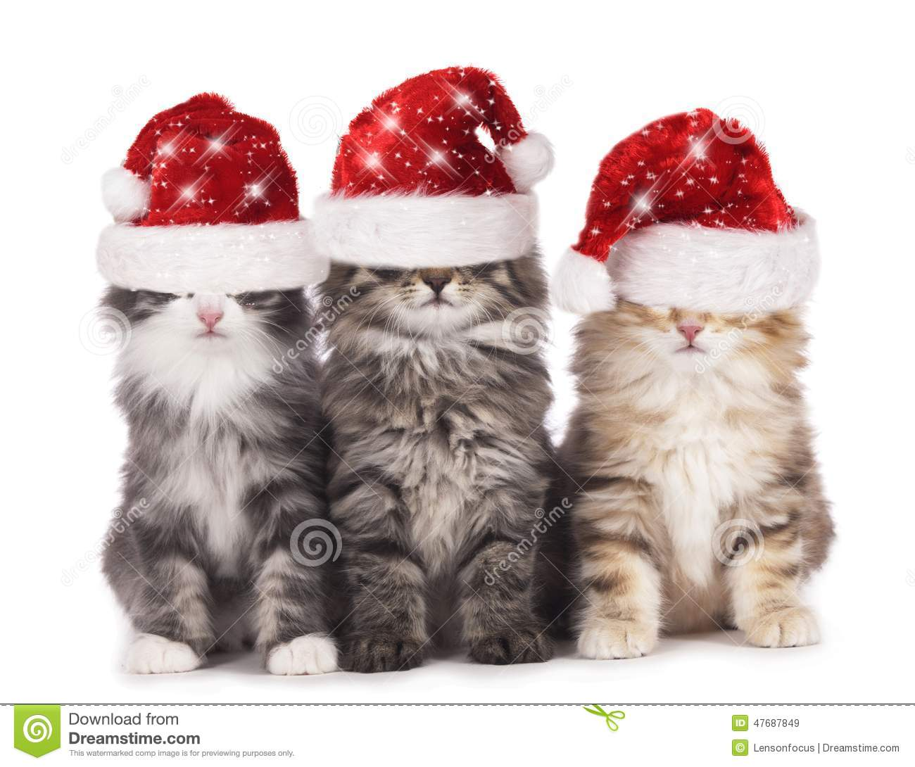 Three Cute Domestic Cats With Santa Hat Stock Image , Image
