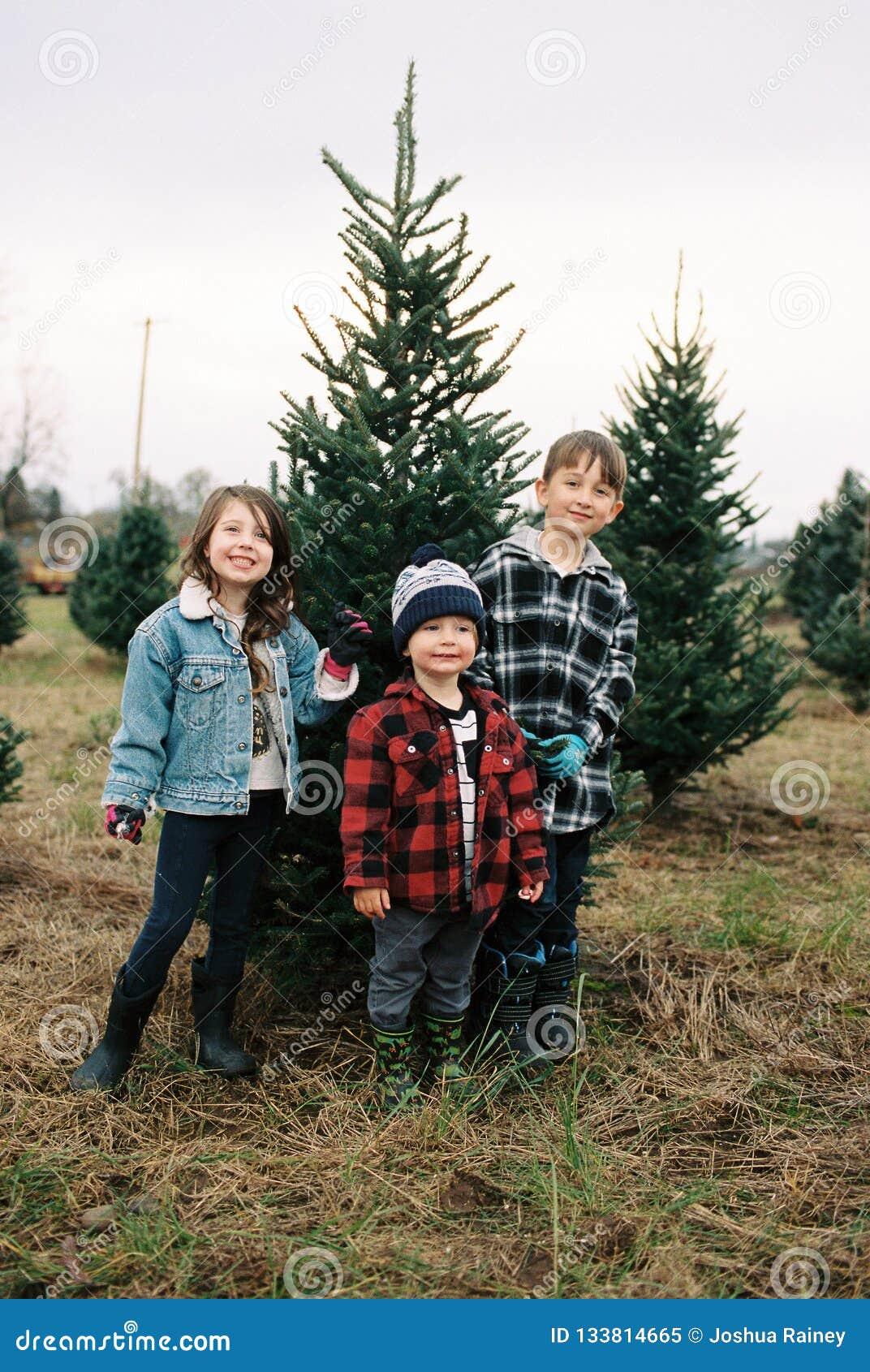 Christmas Tree Farm Film Scans With Oregon Kid Stock Image Image Of Happy Lifestyle 133814665