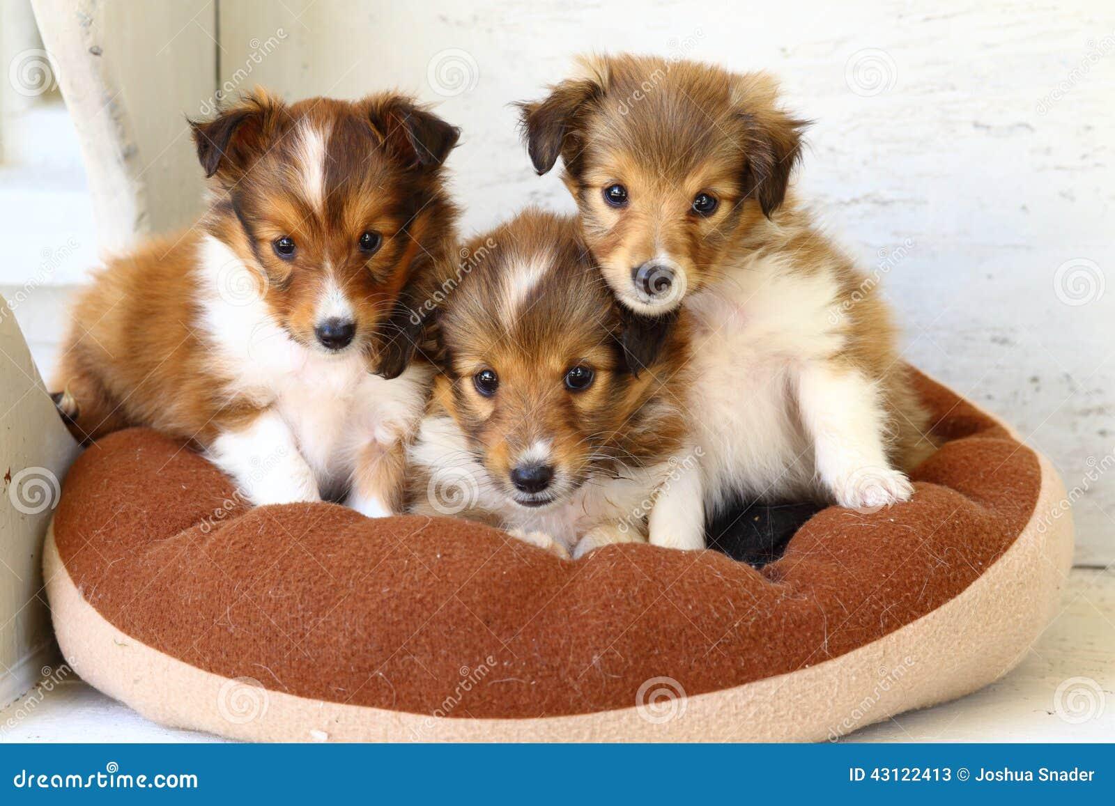 Dog Bed Sheltie