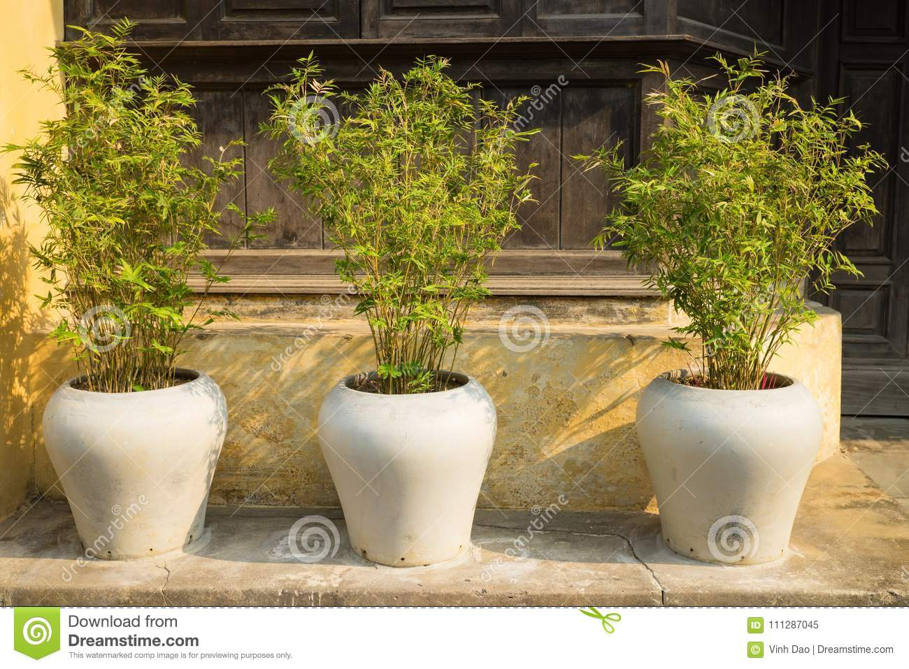 Three Decorative Bamboo Tree Pots In Front Of Old House Stock Image ...