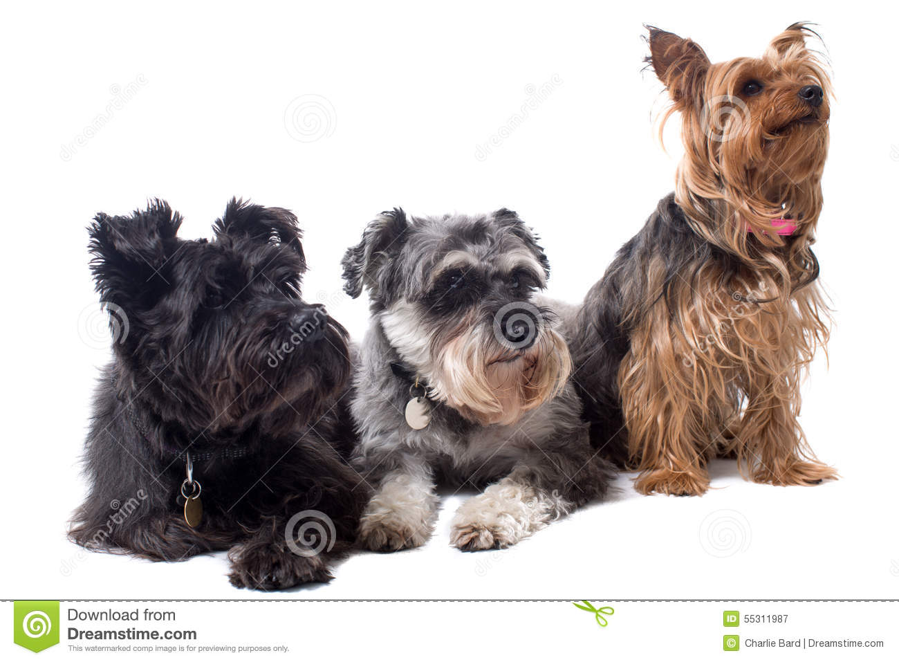 Different types of terrier