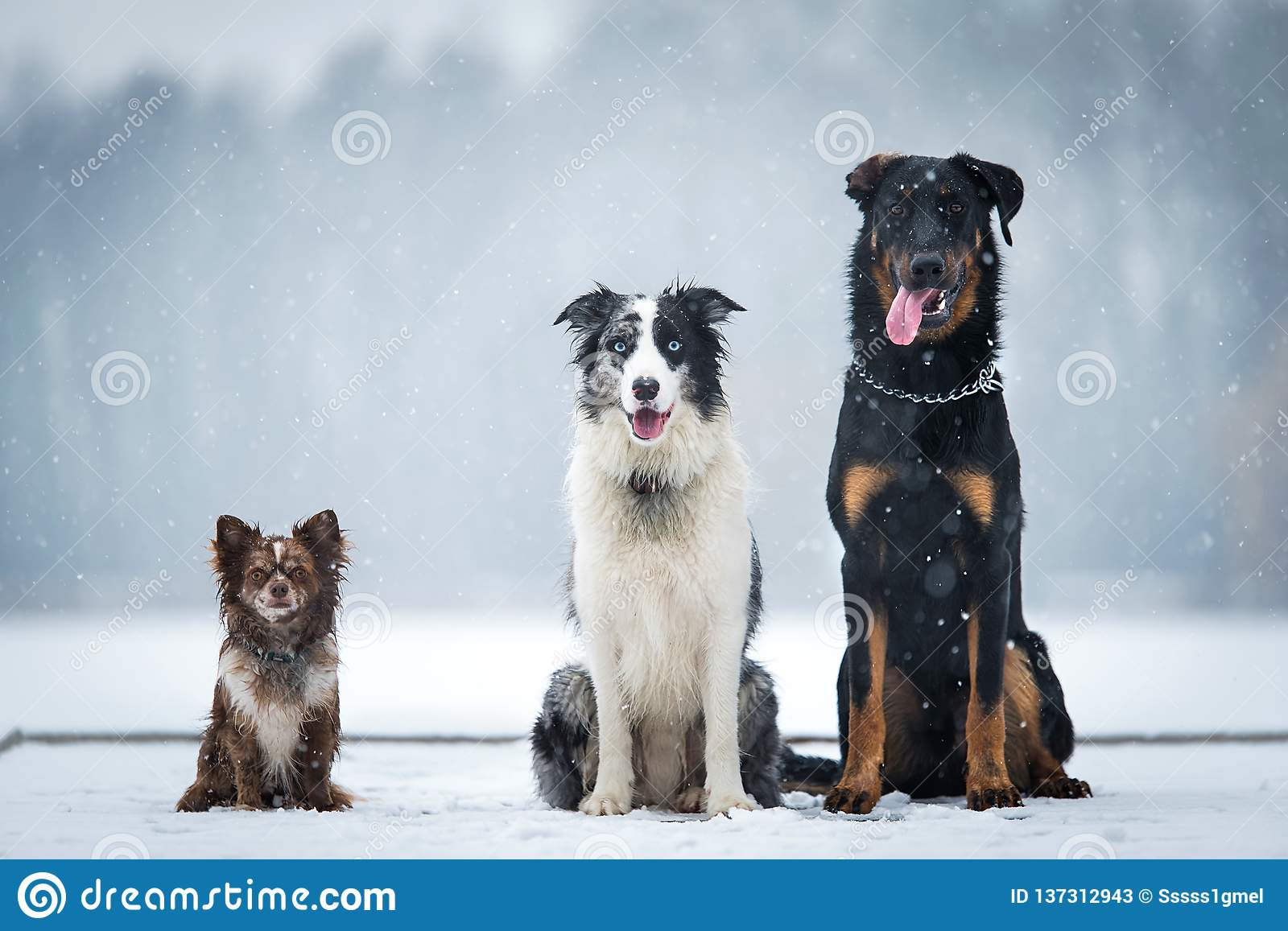 Three dog sitting in the winter park