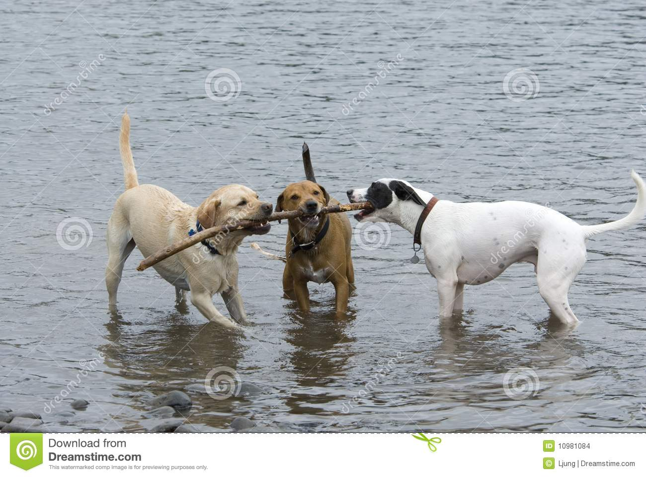 Three Dogs and a Stick