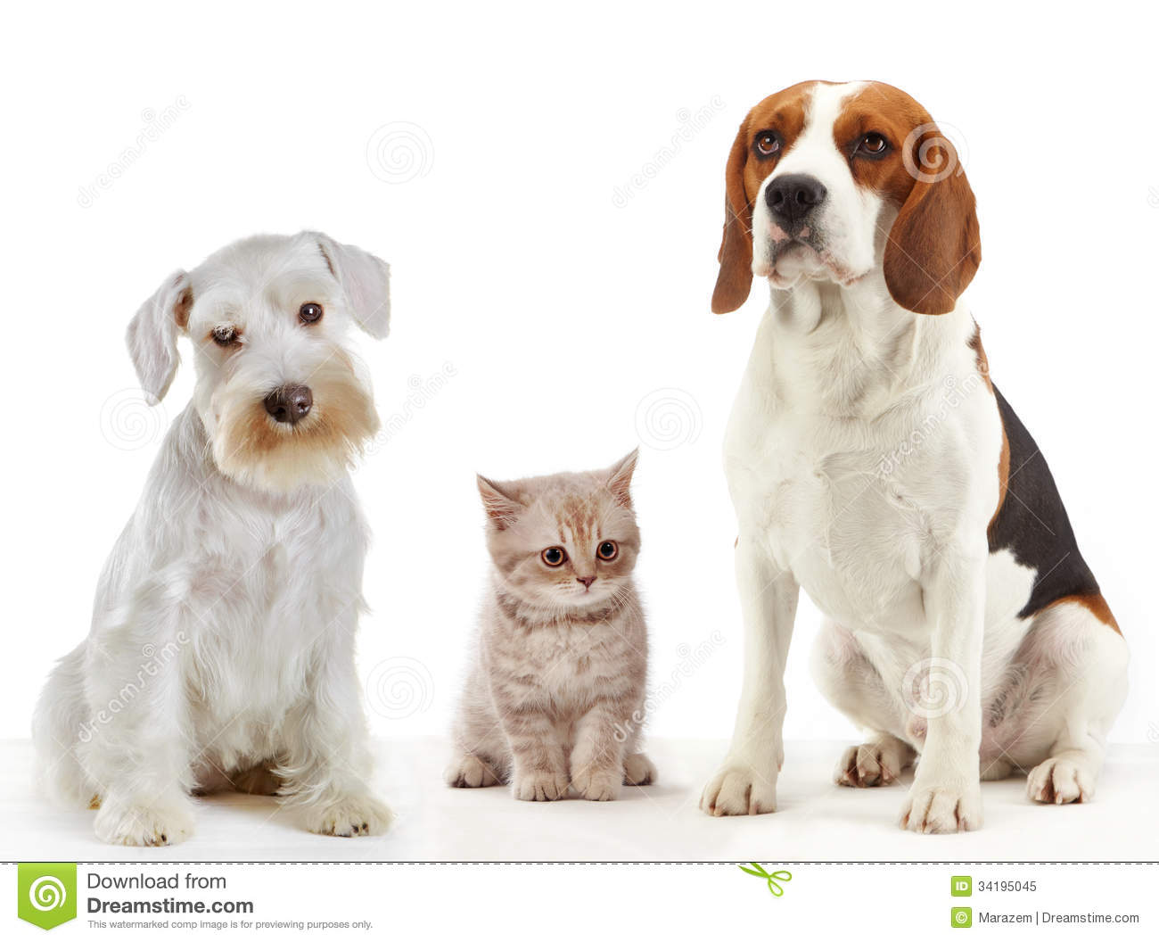 animals the domestic dog 14 of your dog's wild relatives  the common ancestor of domestic dog  play also requires the animals to react quickly to new circumstances and assess complex.