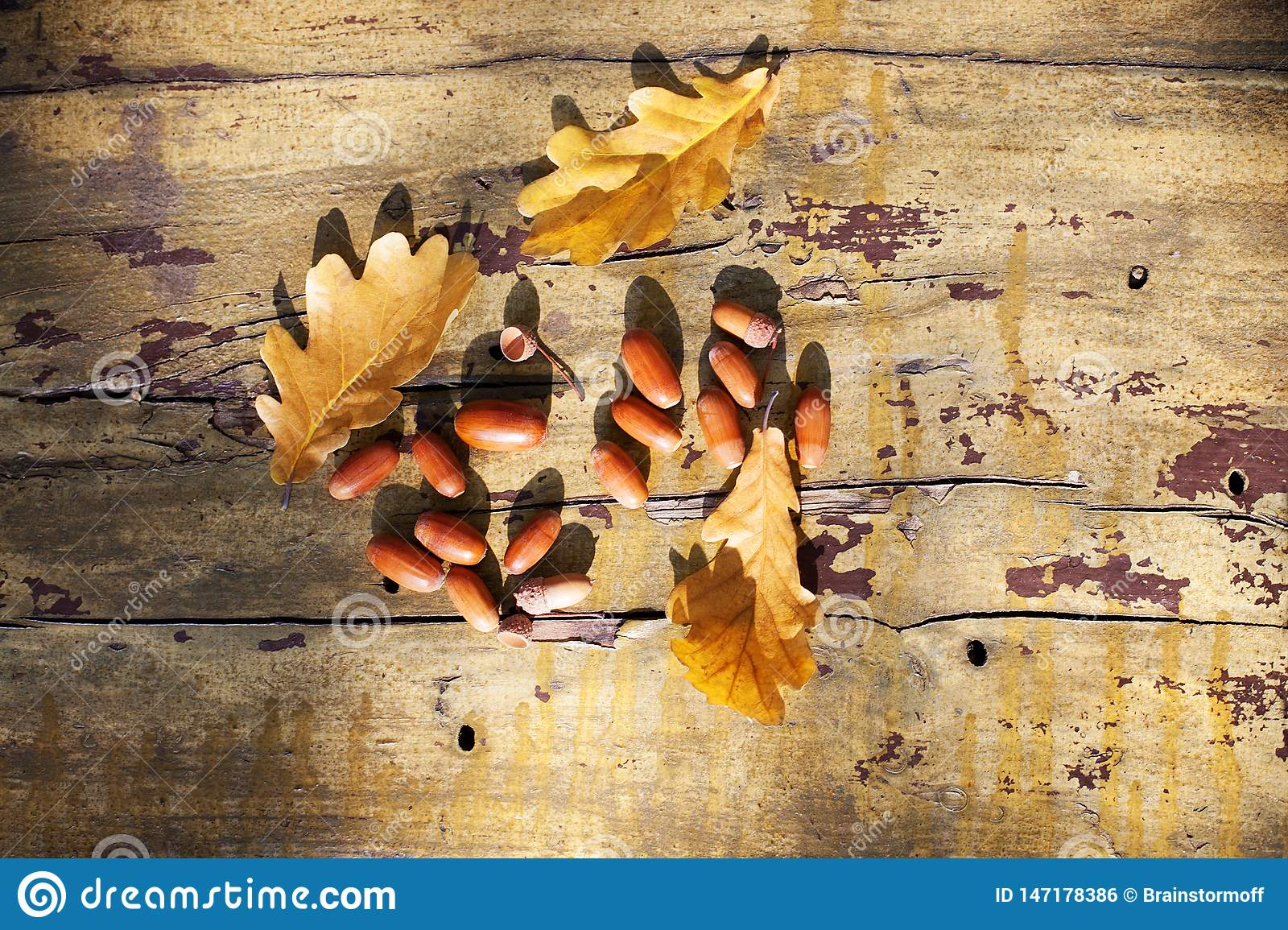 Three fallen yellow oak tree leaves and red acorns on old wooden board background close up, golden autumn foliage on bench in park