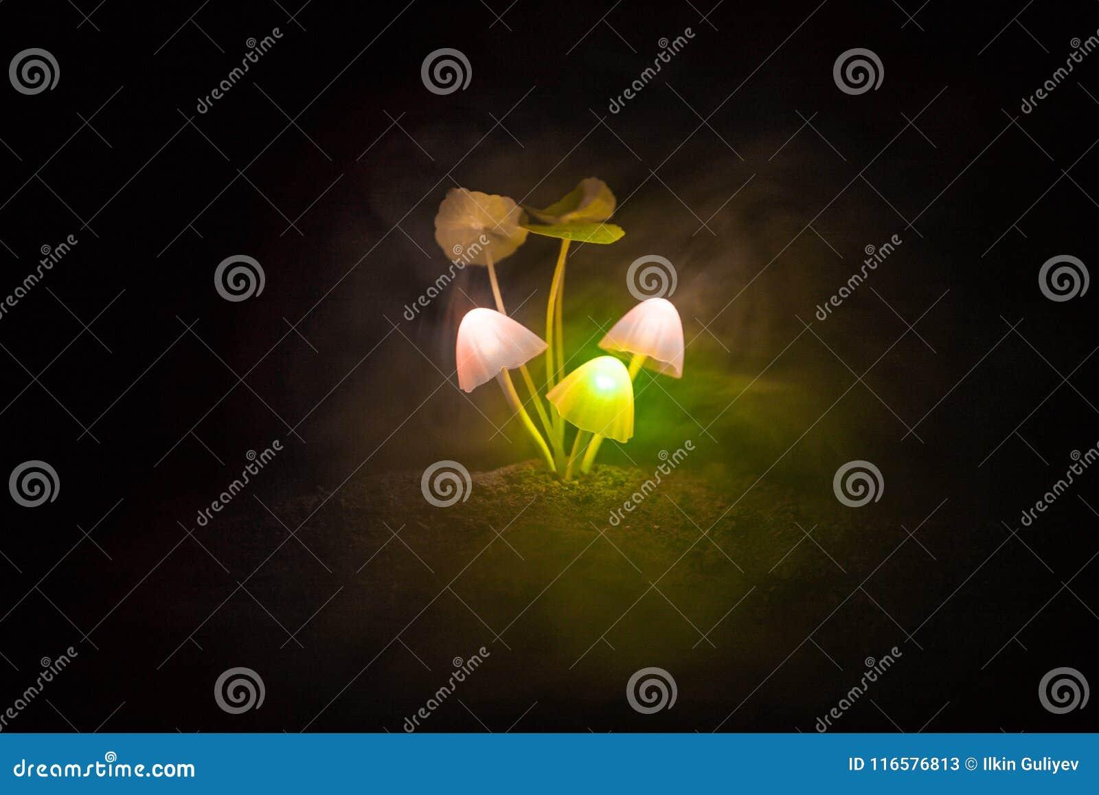 Three fantasy glowing mushrooms in mystery dark forest close-up. Beautiful macro shot of magic mushroom or three souls lost in ava