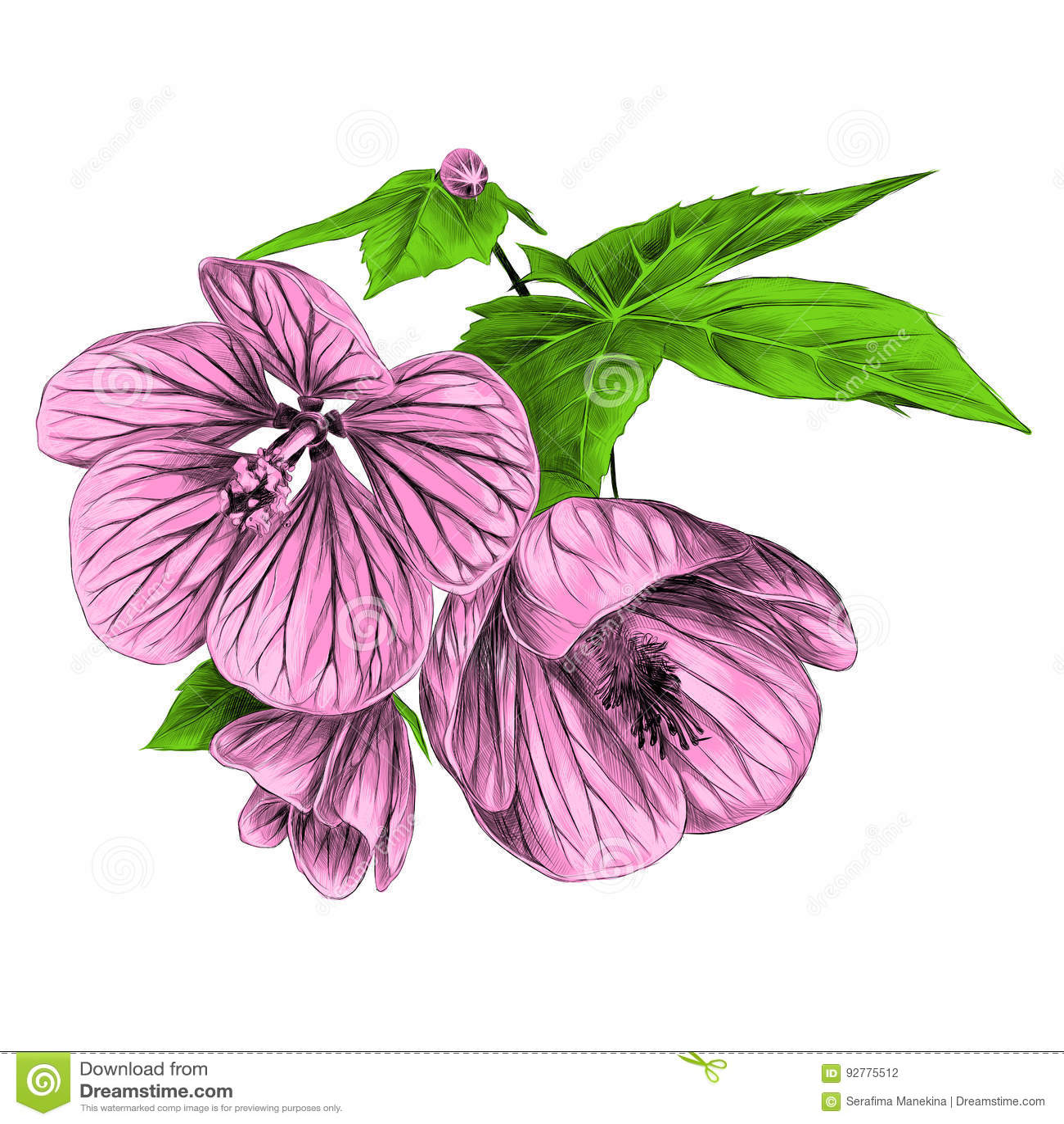 Three Flowers Sketch Vector Graphics Stock Vector Illustration Of