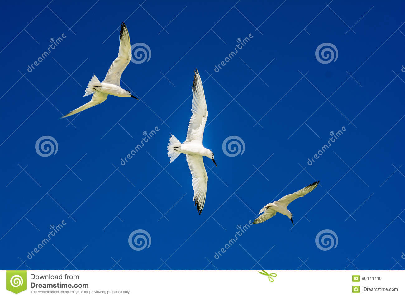 Download Three flying birds stock photo. Image of birds, clearsky - 86474740