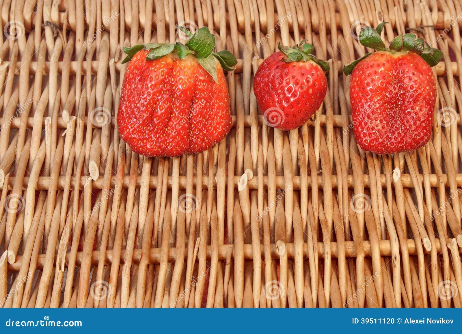 Three Fresh Summer Organic Strawberries Still Life,