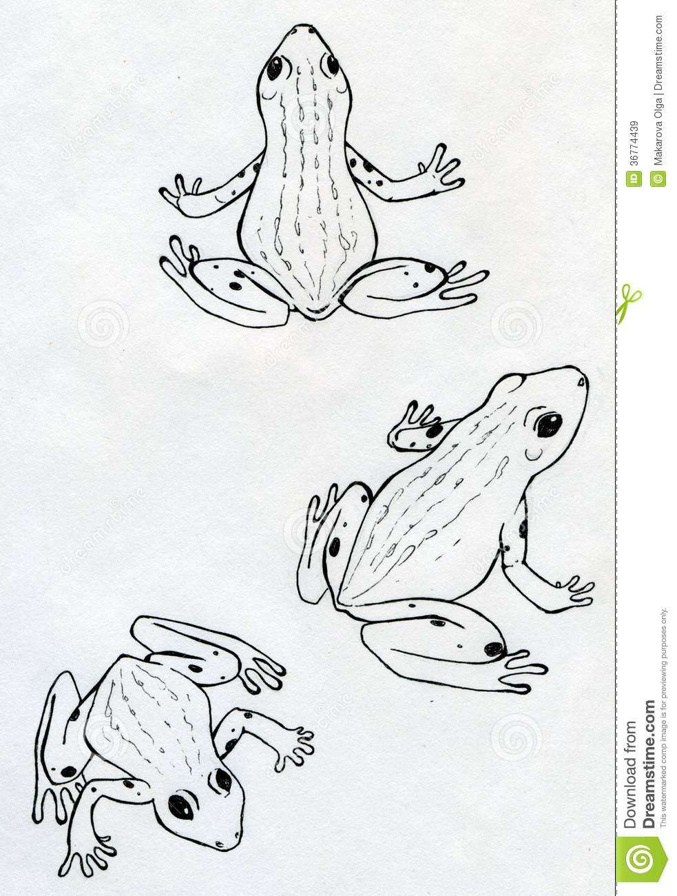 three frogs royalty free stock images image 36774439