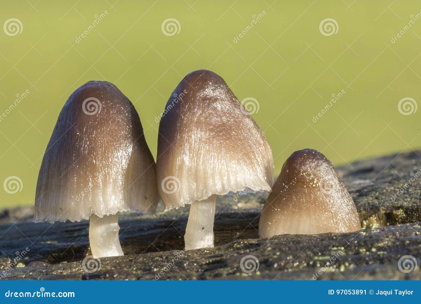Three Fungi