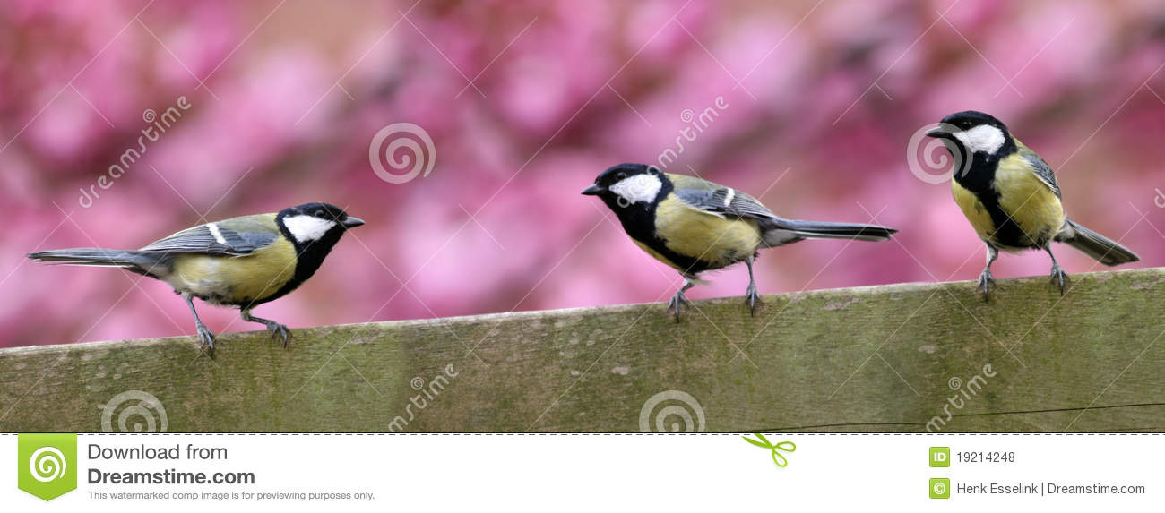 Download Three Garden Birds On Fence Stock Photo - Image of outside, birds: 19214248