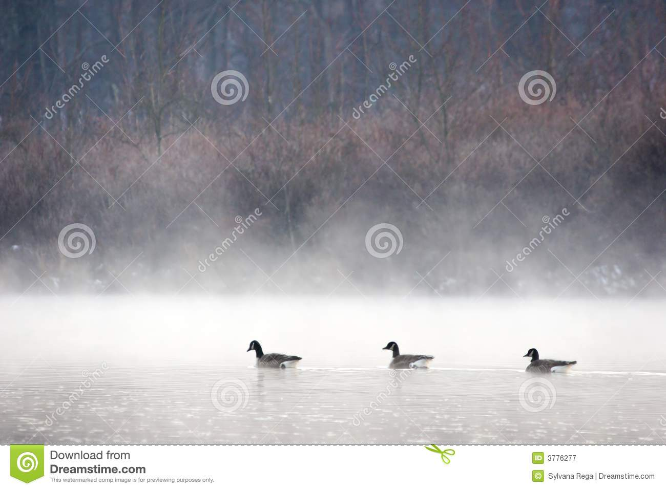 Three Geese in the mist