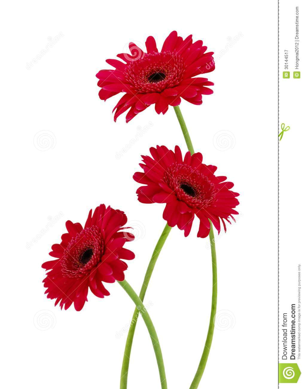 Three gerbera daisy flowers stock image image of studio download three gerbera daisy flowers stock image image of studio background 30144517 izmirmasajfo
