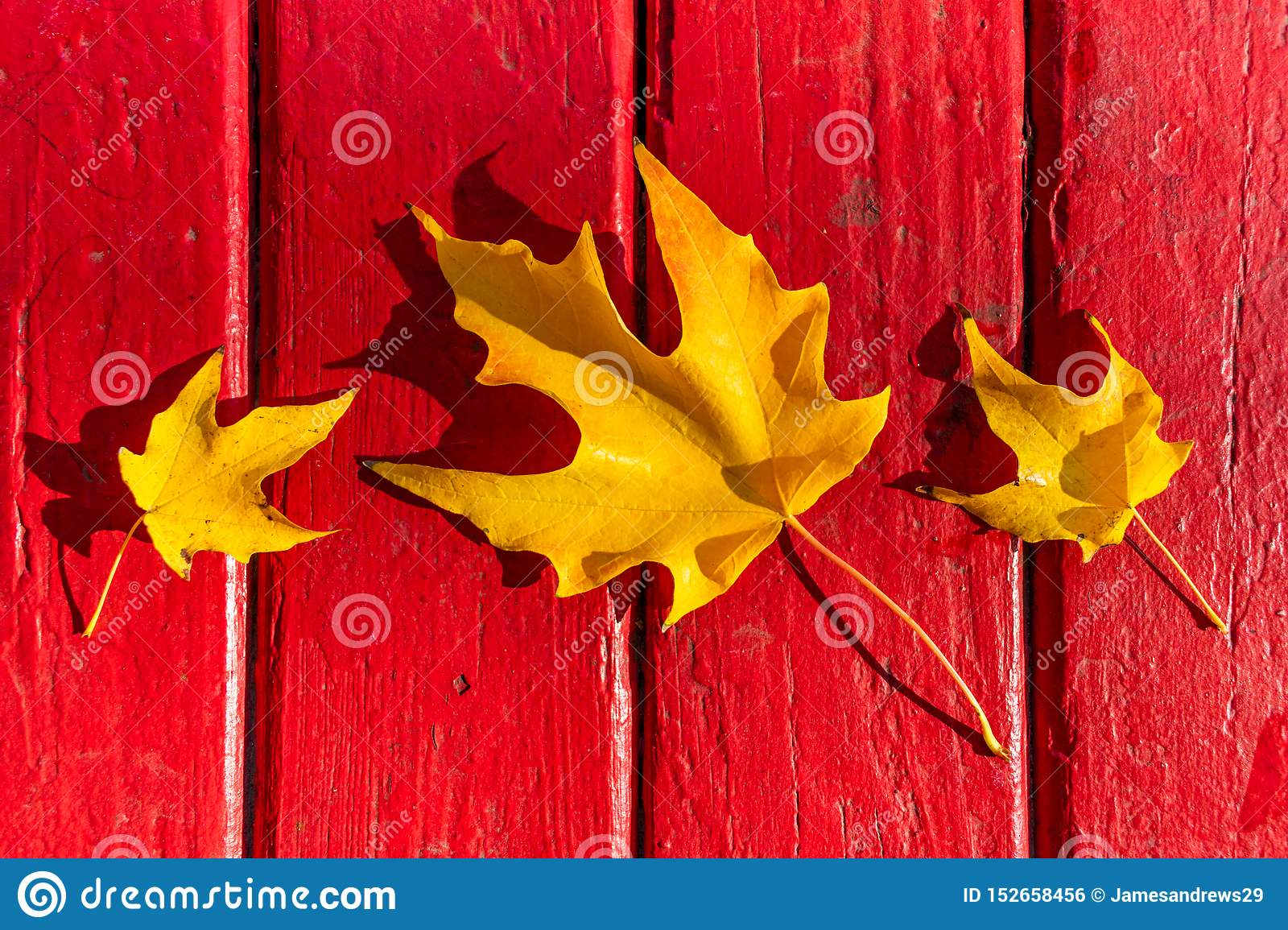Three Golden Leaves during Autumn on a Red Wooden Table