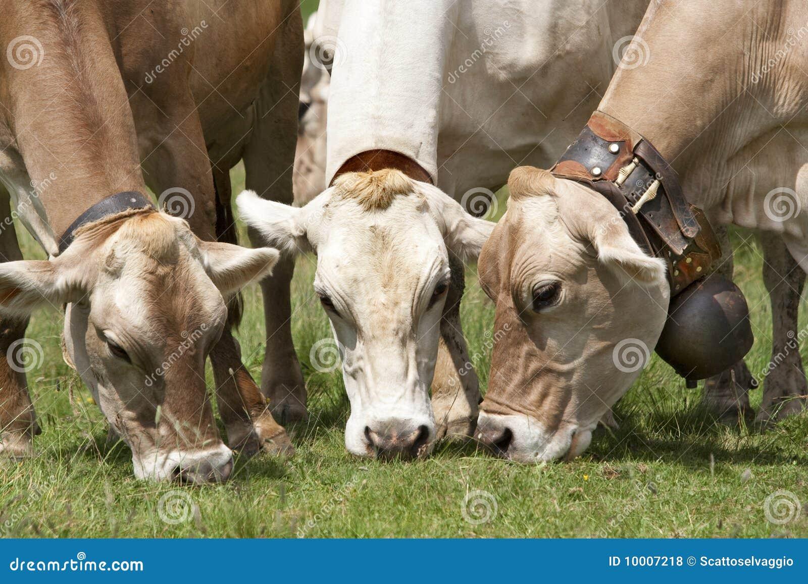 Sunny Beach Farm Studios  Cow Art Equine Artist Larry