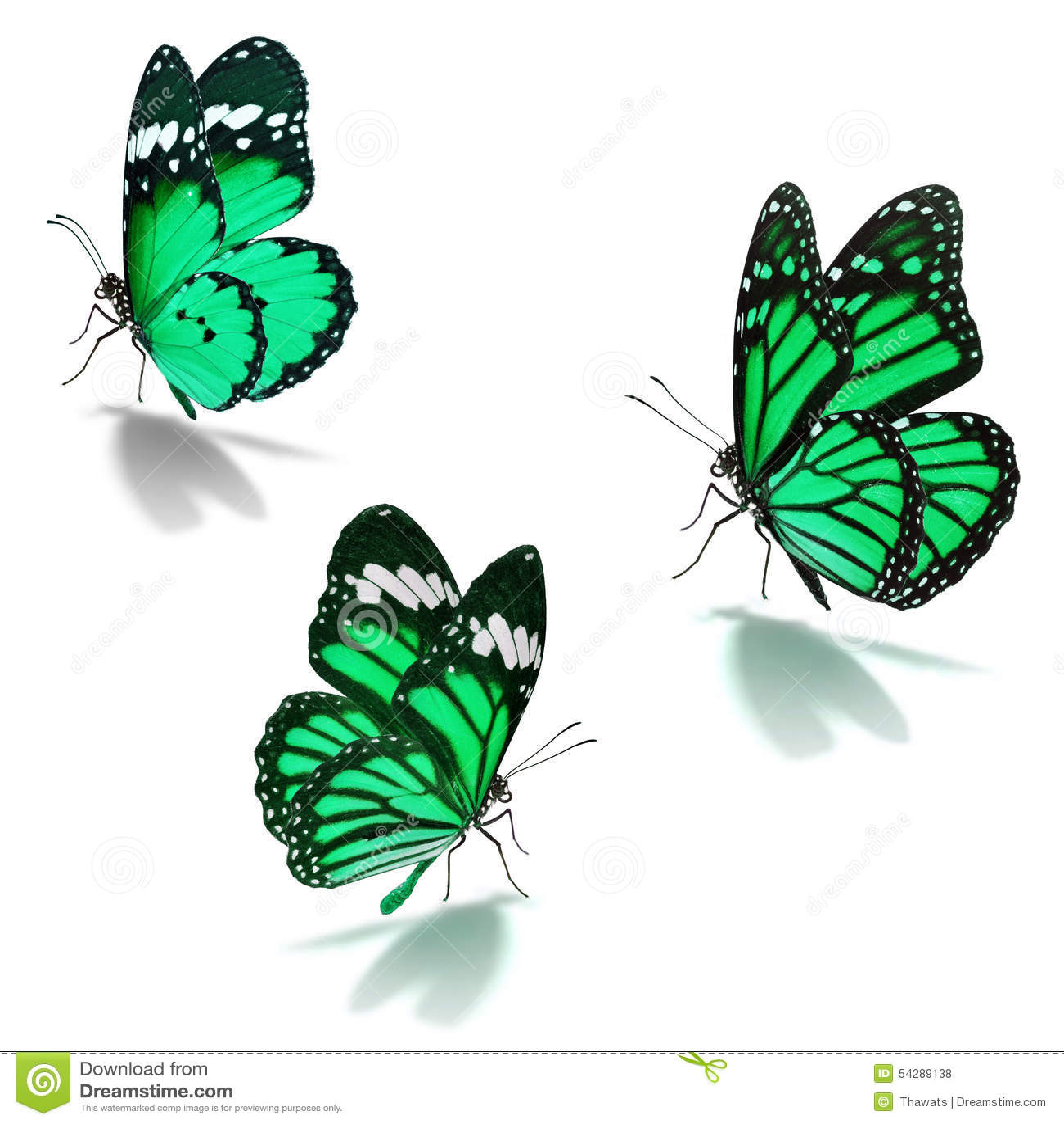 Three green monarch butterfly