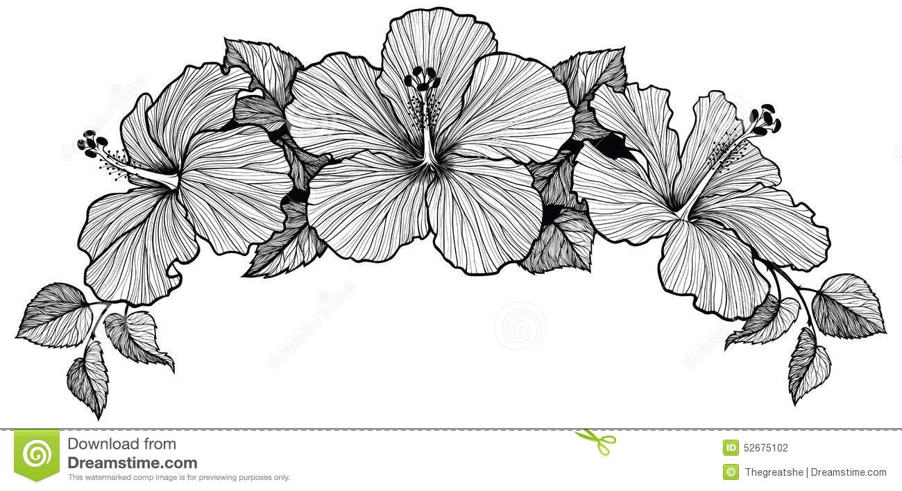 Hawaiian Flower Line Drawing : Three hibiscus flower bouquet stock vector illustration