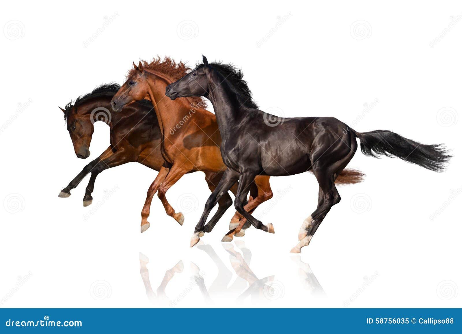 Three Horse Run Gallop Stock Photo Image 58756035