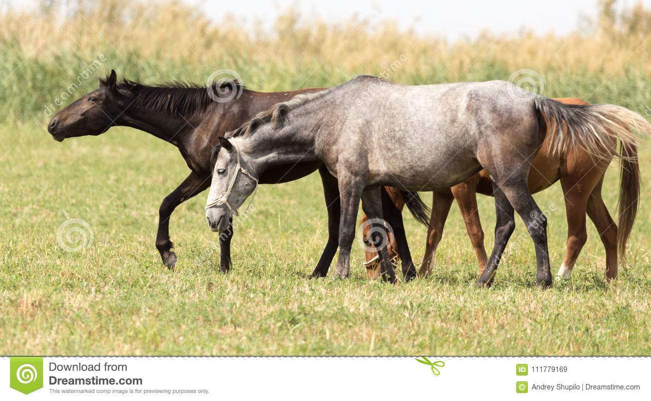 Three horses in a pasture in nature