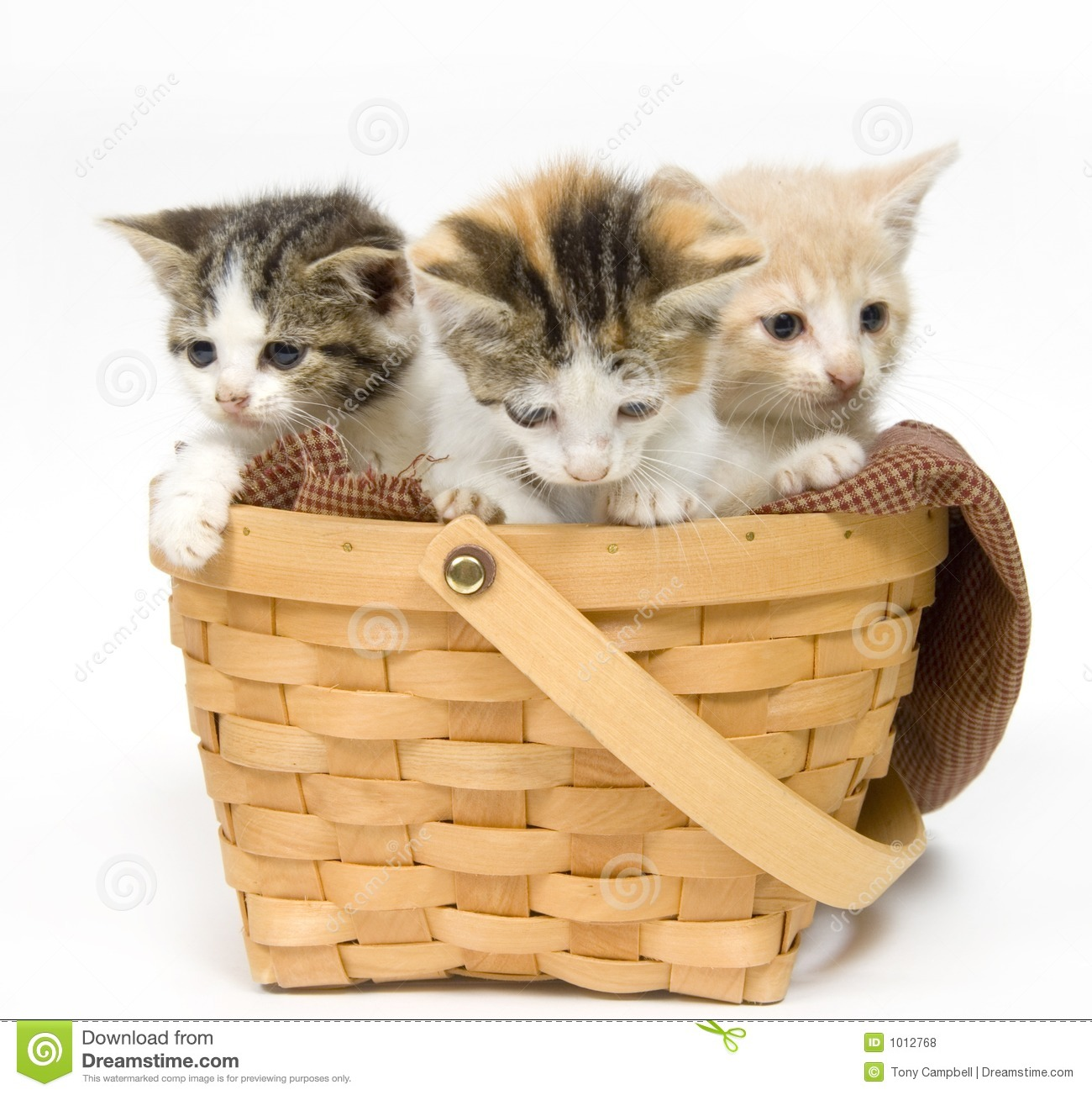 How To Weave A Cat Basket : Three kittens in a basket stock photo image of blanket