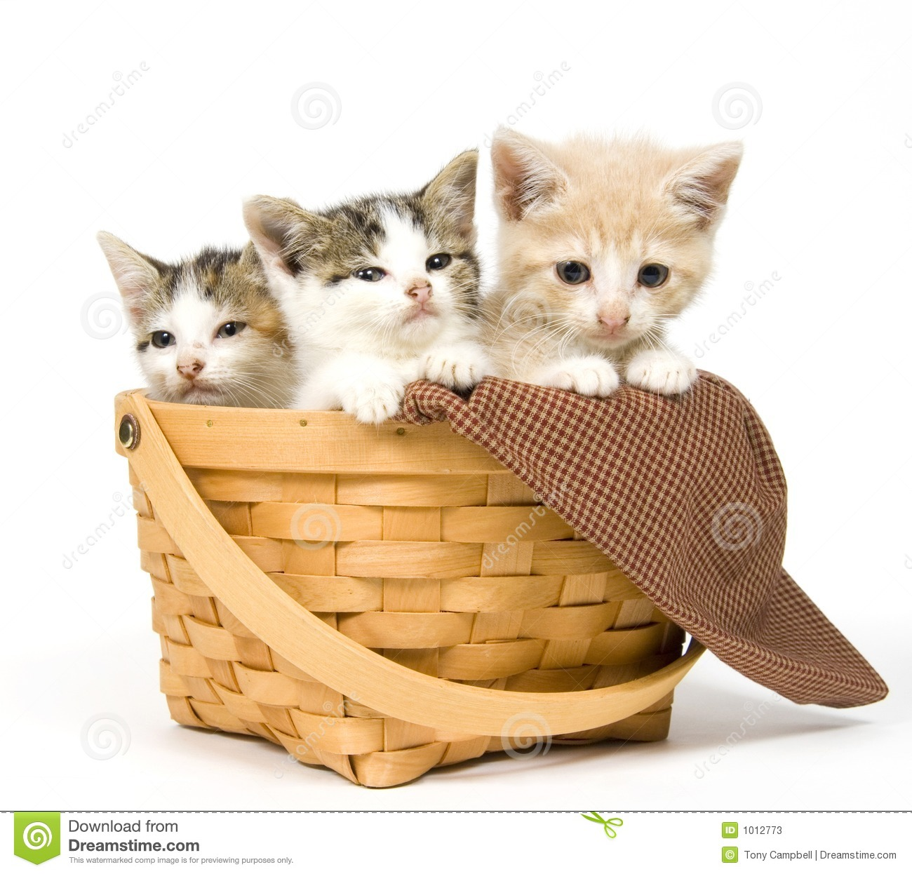 Three Kittens In A Basket Stock Photos - Image: 1012773