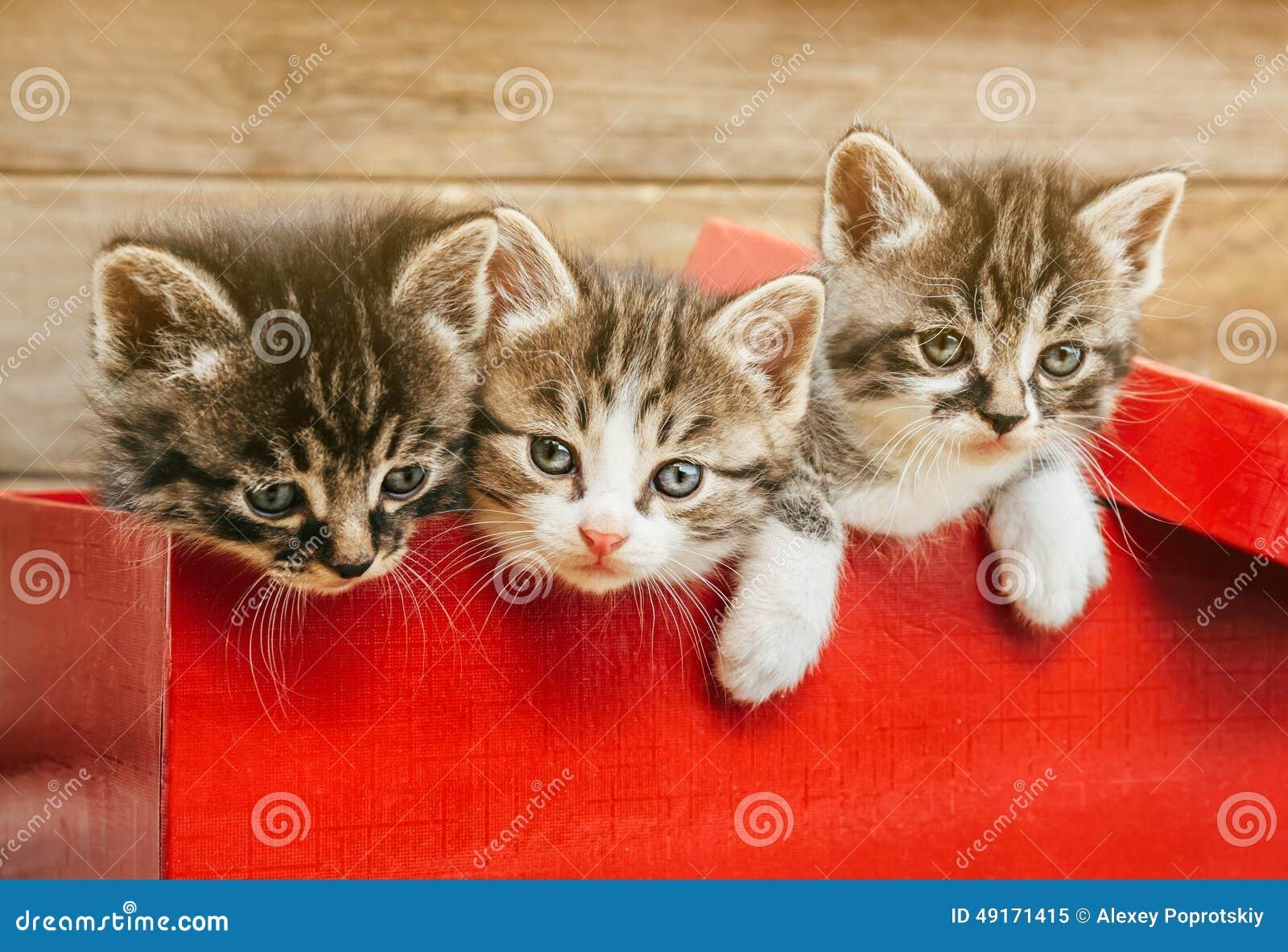 Three kittens sitting in a red box