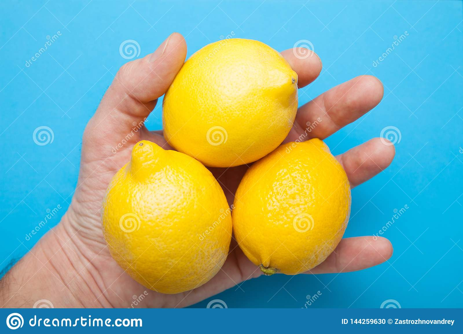 Three large lemons in the hand are isolated on a blue background
