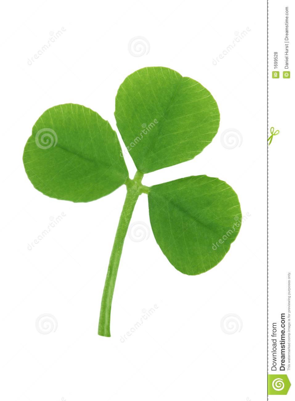 Three Leaf Clover Stock Photo Image Of Good Lucky Background
