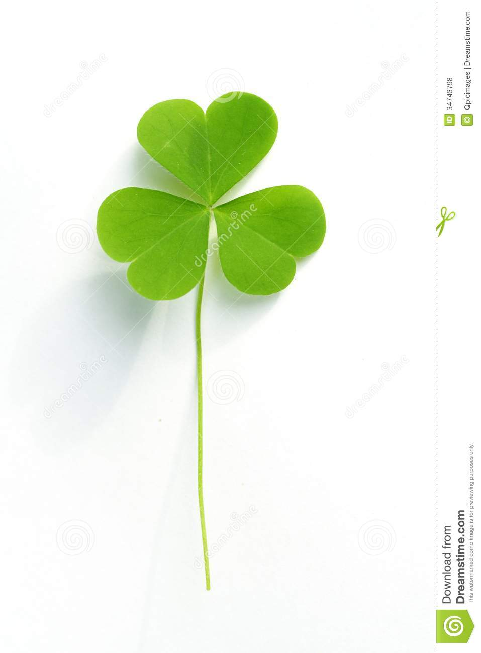 three leaf clover royalty free stock photos image 34743798