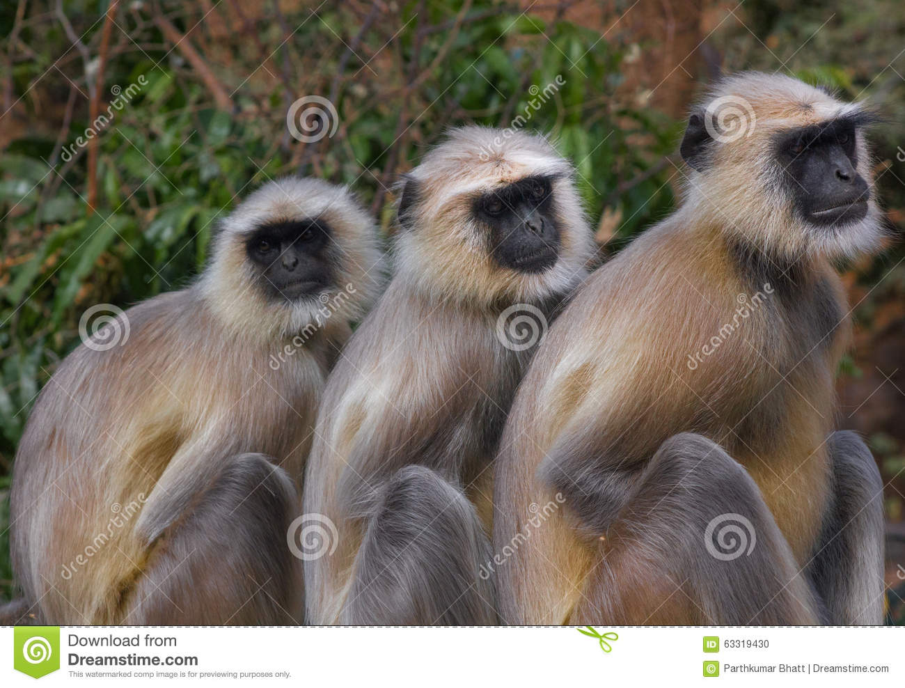 three monkeys images  Three Monkeys Stock Images - Download 740 Photos