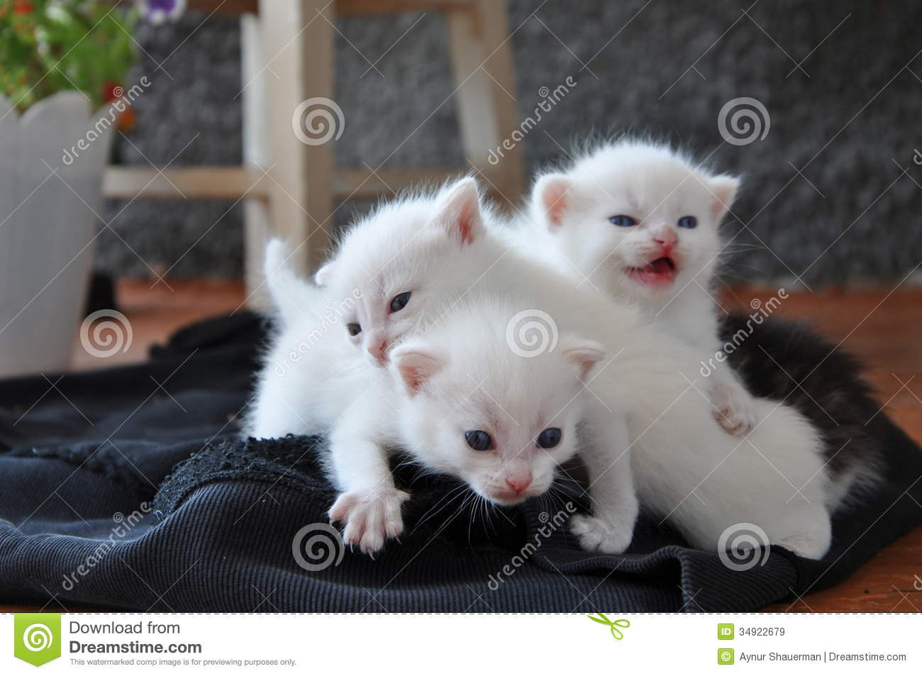 Three Newborn Kittens The Porch Stock Image Image