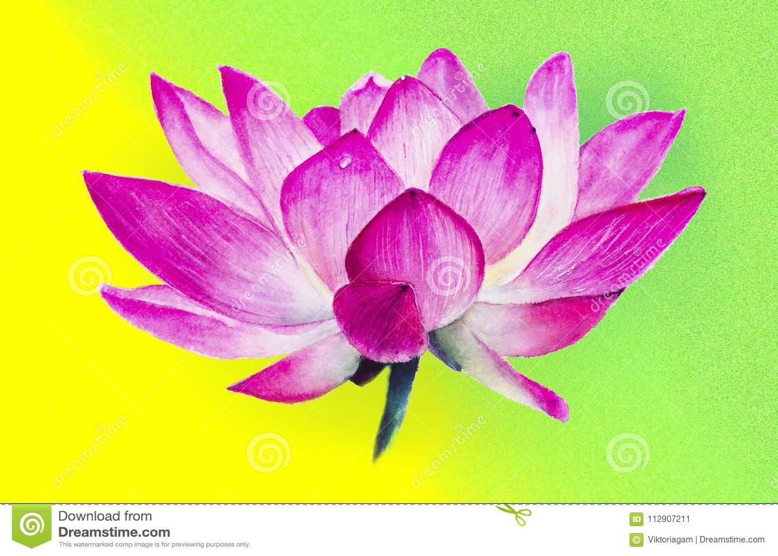 Lotus Flower Macro Close Up Side View Watercolor Drawing Re