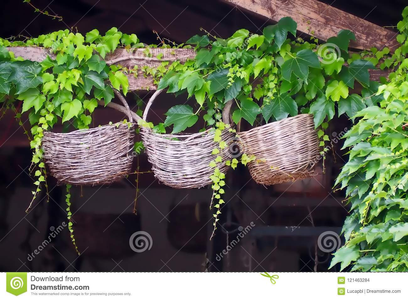 Three old used decorative round wicker baskets, hung on a wooden beam with ivy around