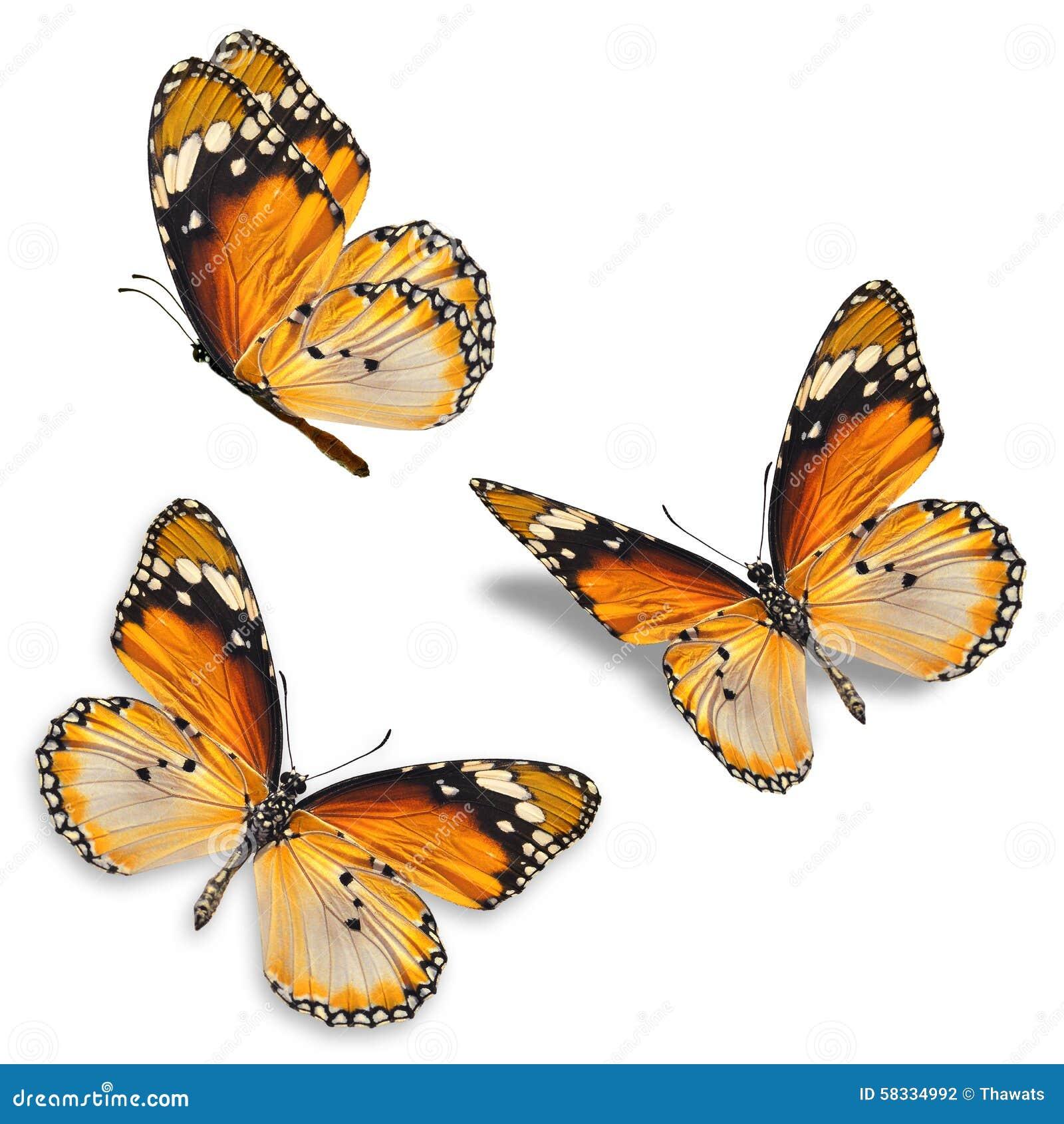 Three orange butterfly