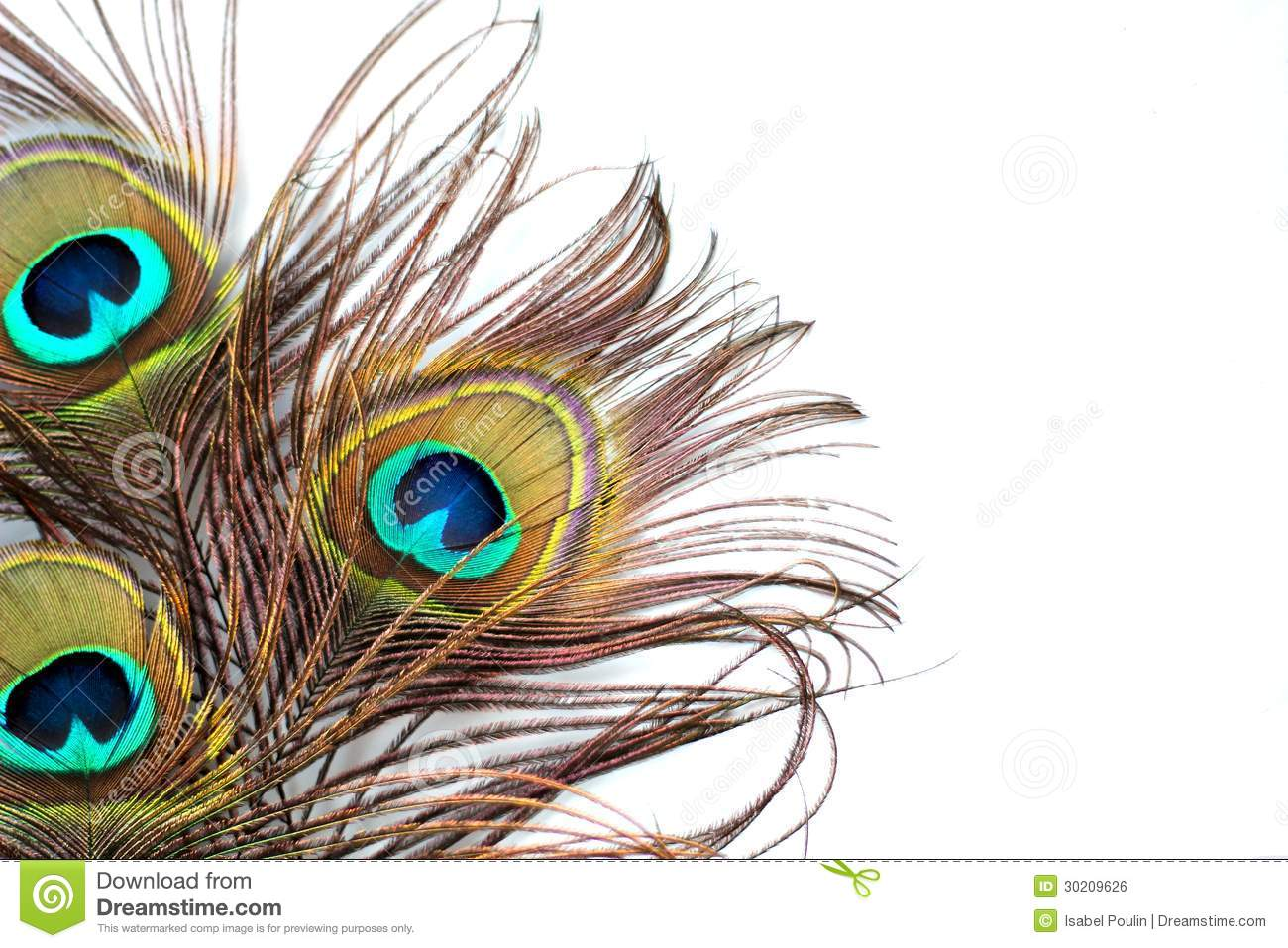 Peacock Feathers Royalty Free Stock Image Image 30209626