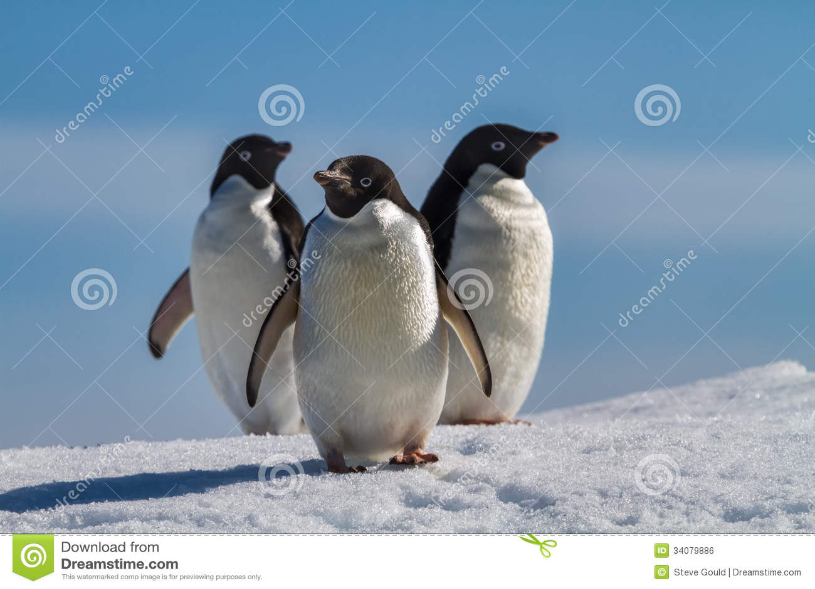 Three penguins on snow, Antarctica
