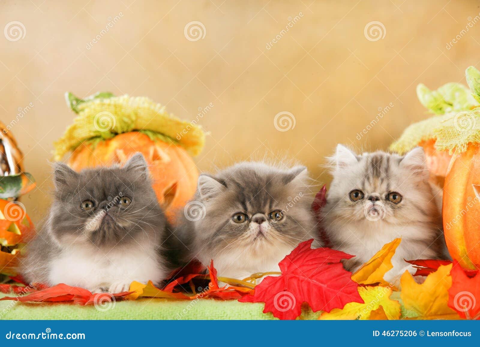 cat lynx autumn foliage - photo #36