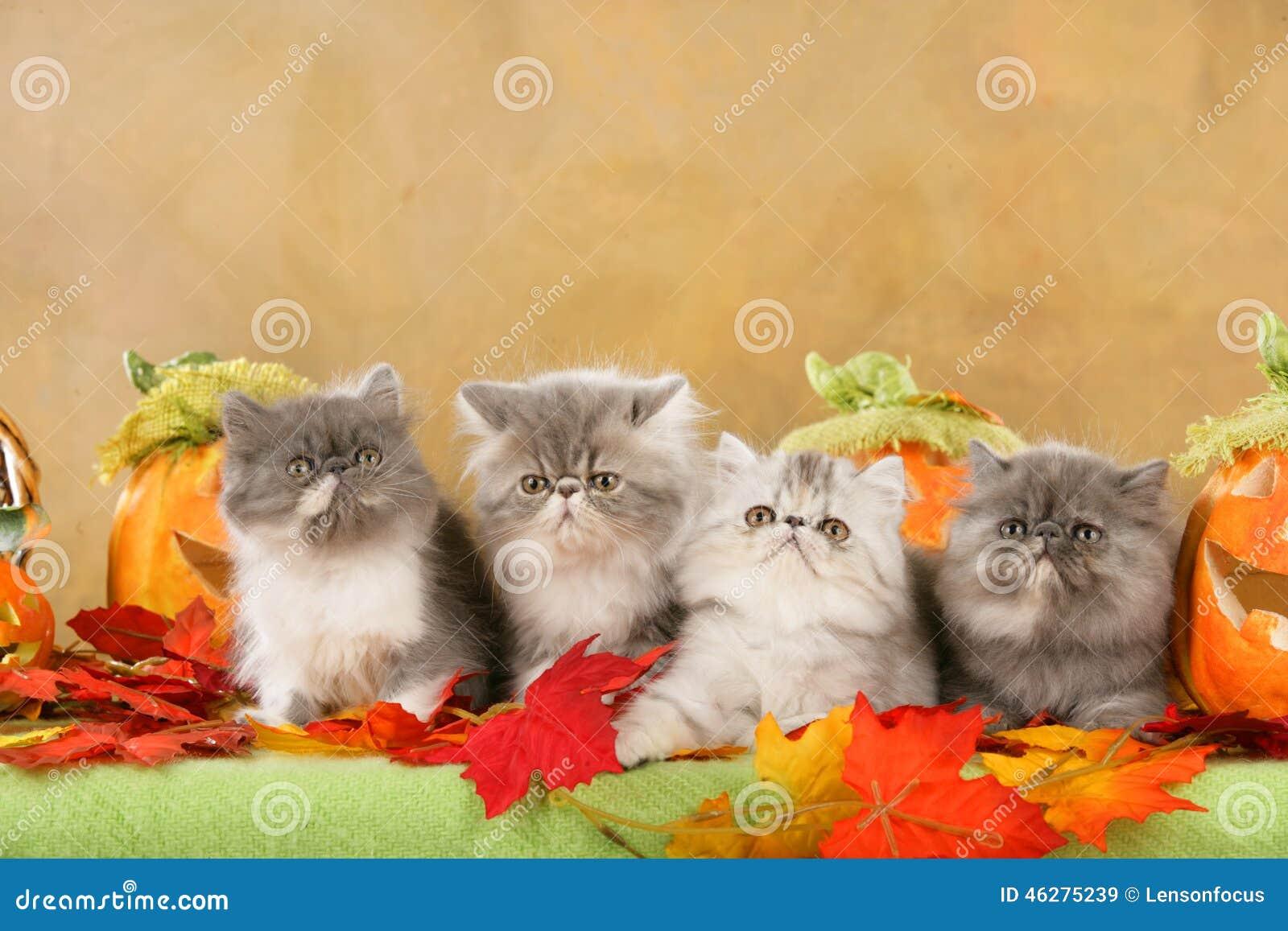 cat lynx autumn foliage - photo #31