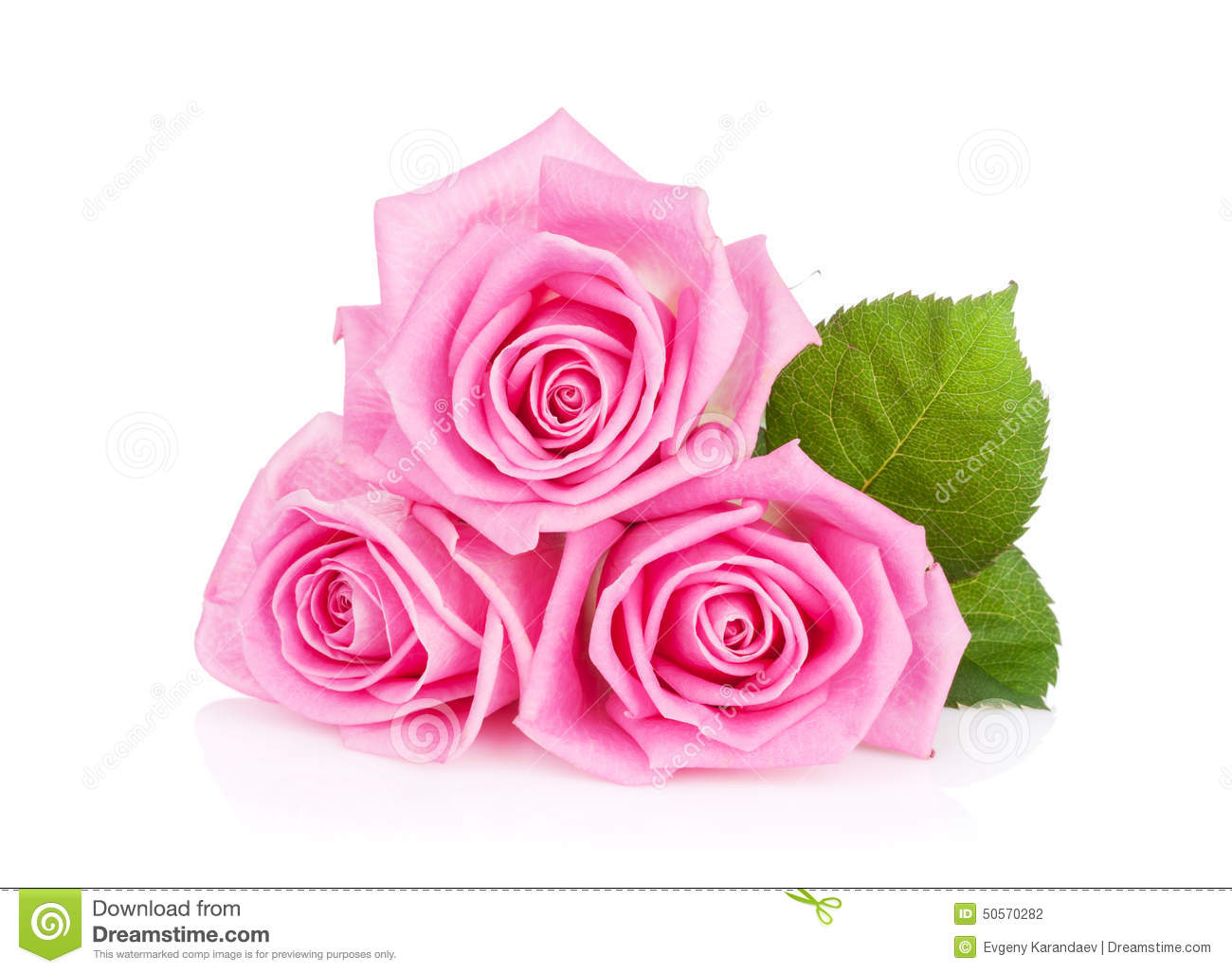 Three pink rose flowers stock photo image of gift closeup 50570282 three pink rose flowers mightylinksfo