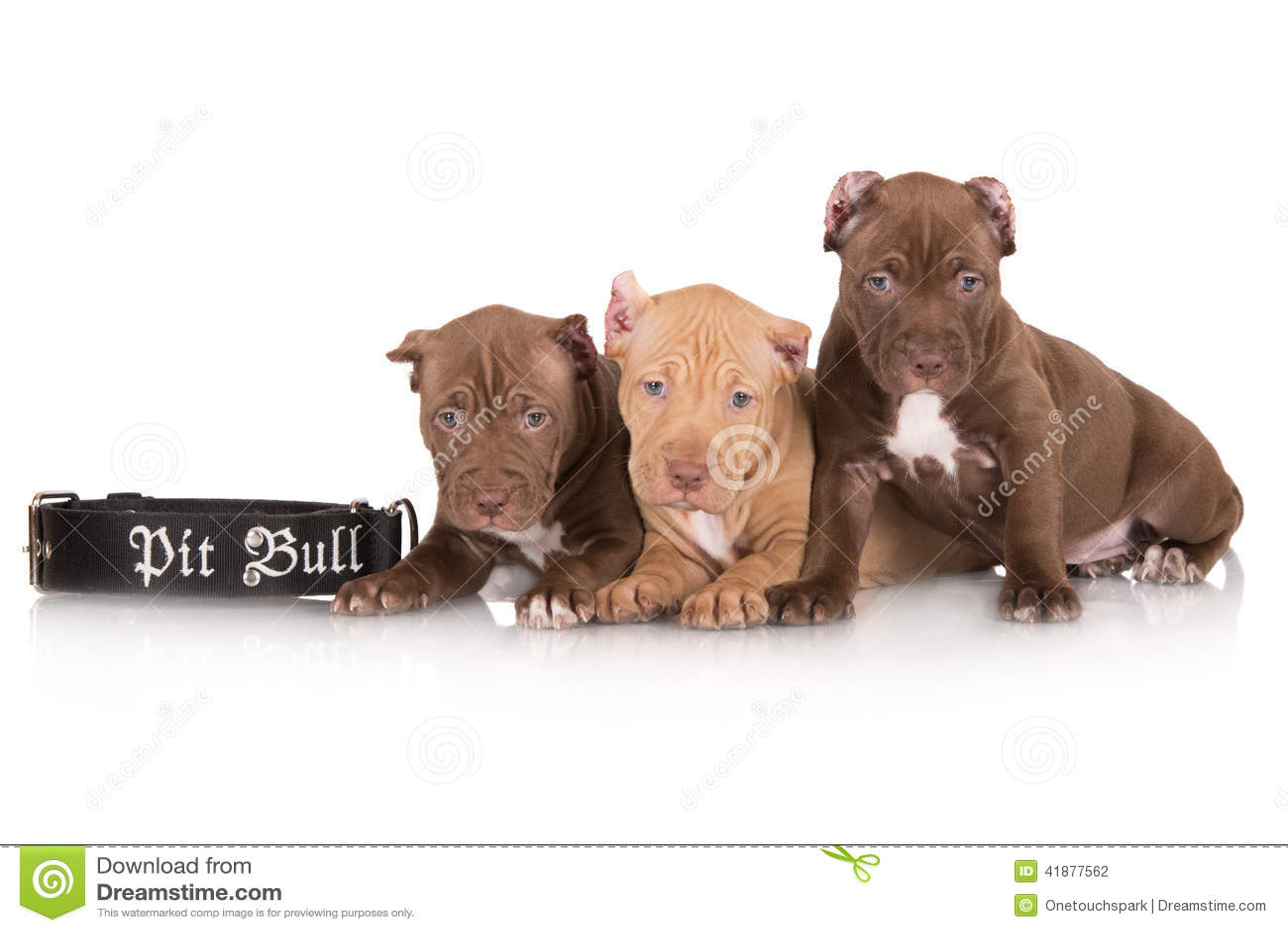 Pet Play Puppy Collar