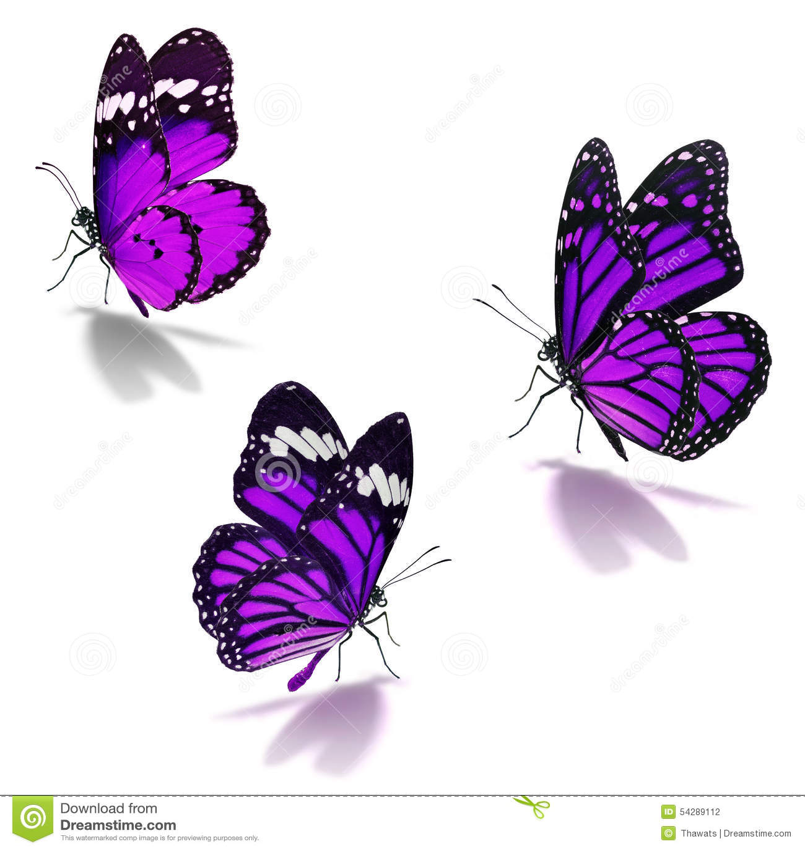 three purple monarch butterfly stock photo image 54289112