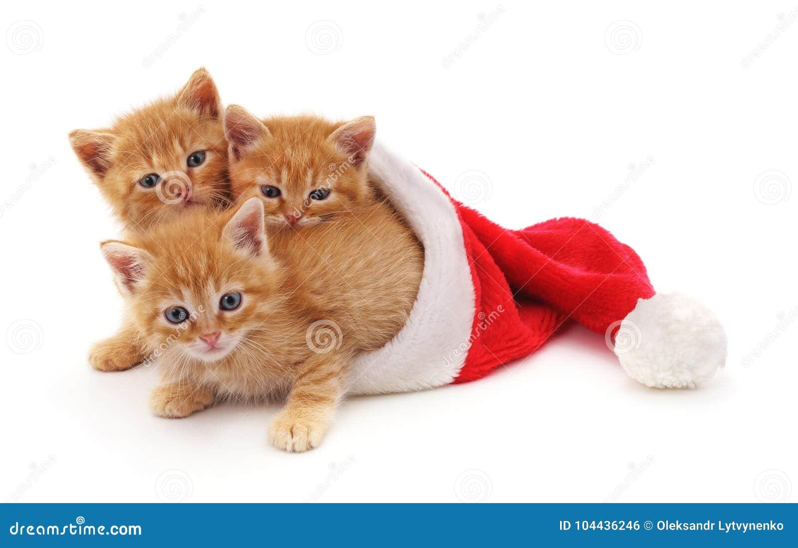 Three red kittens in the hat Santa.
