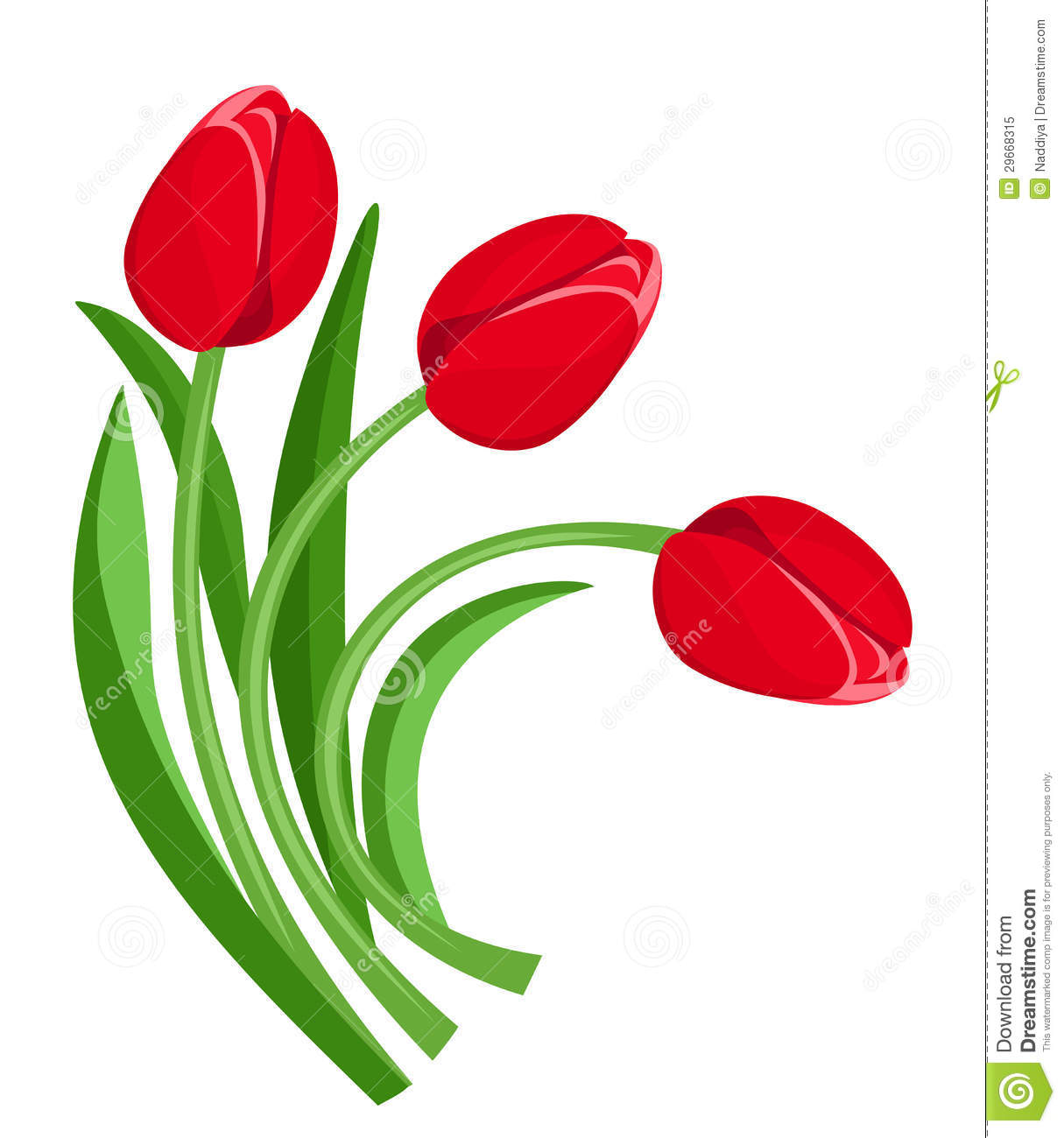 Vector illustration of three red tulips isolated on a white background ...