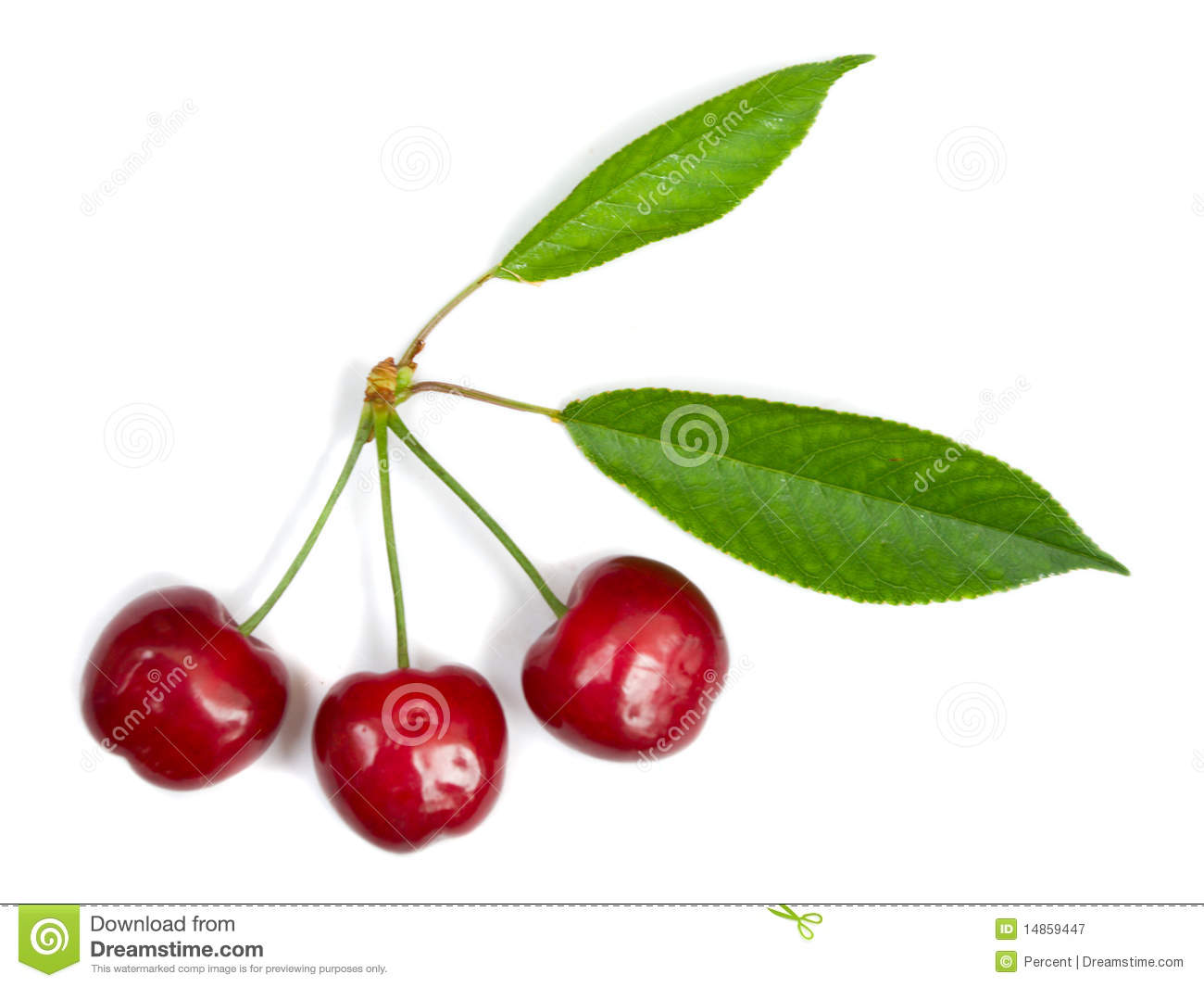 Three ripe cherries with leaves