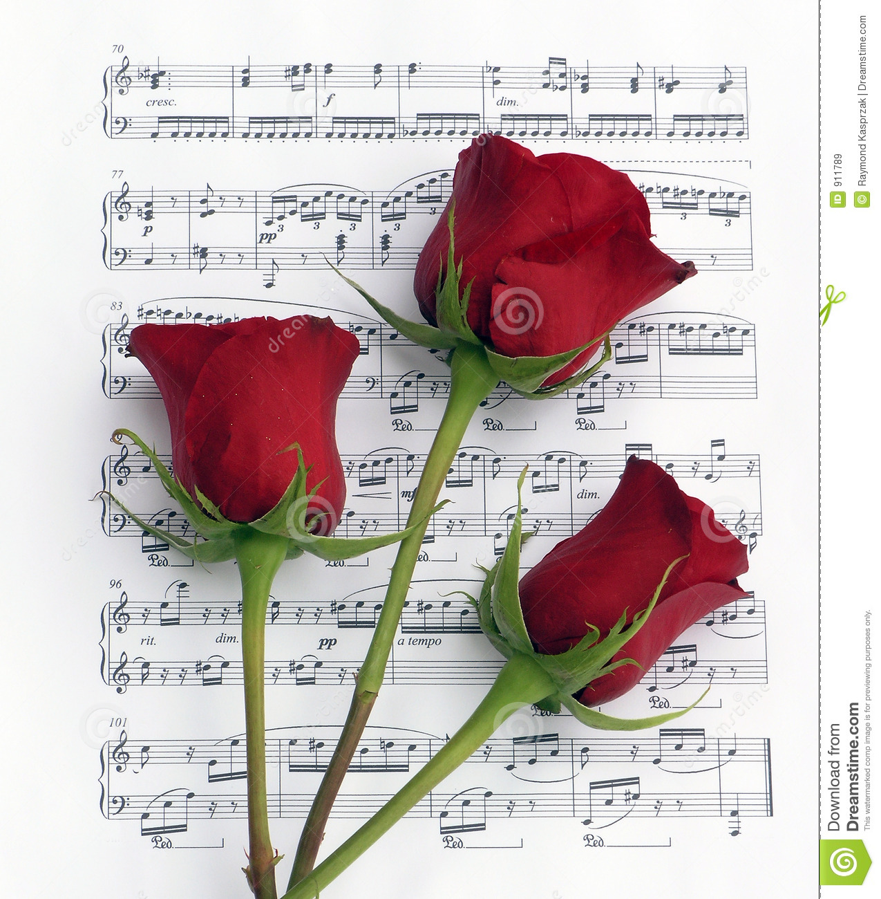 Three Rose Music stock image  Image of notes, piano, love - 911789