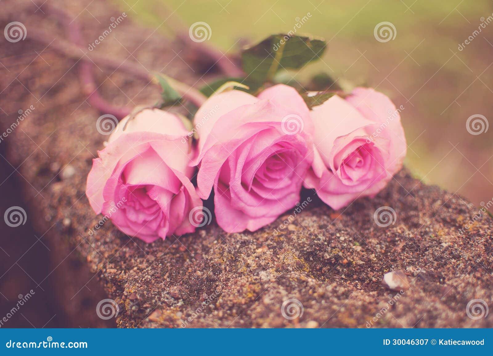 Download Three Roses stock image. Image of spring, gardening, roses - 30046307