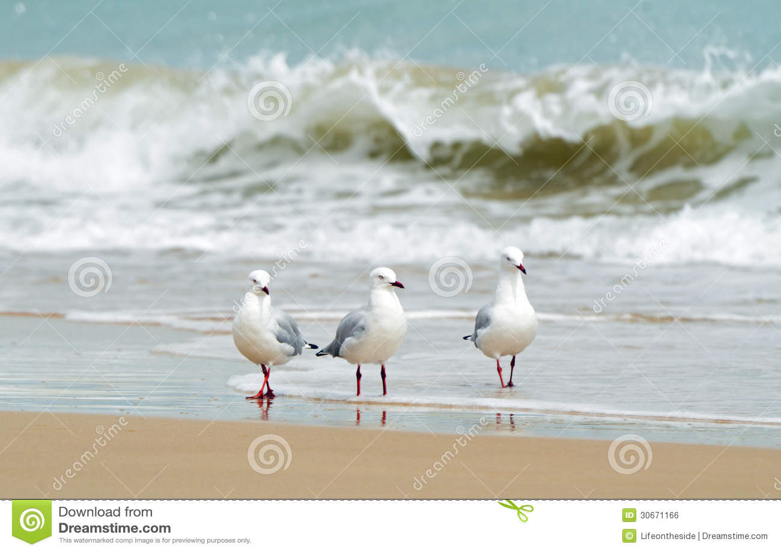 Three sea birds paddling in waters edge of beach