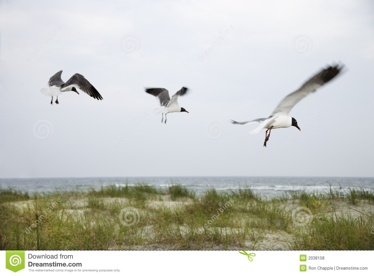 Three seagulls flying over beach.