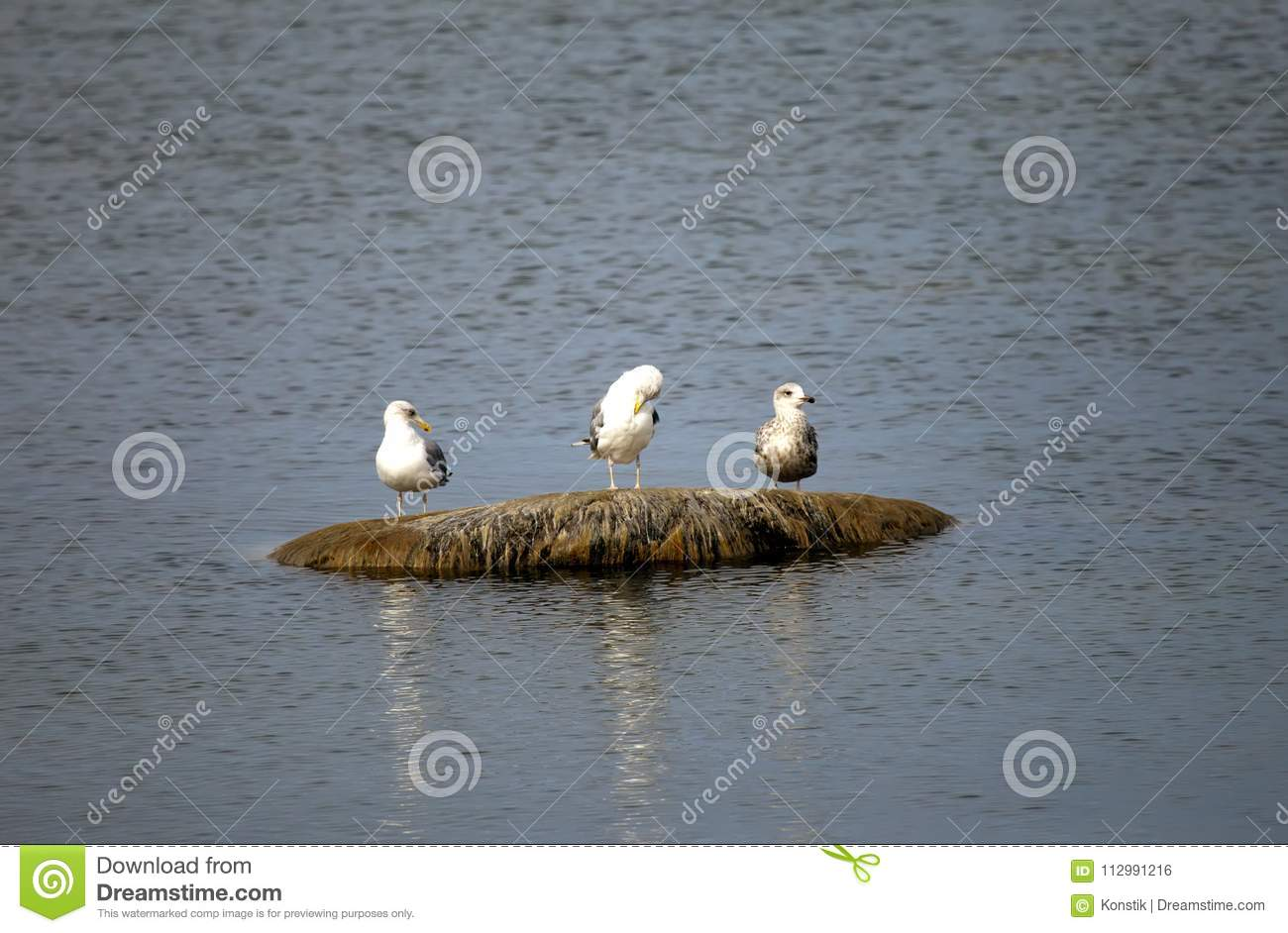 Three seagulls sit on a stone in the sea
